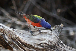 Vital Federal Conservation Funds Threatened