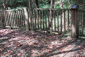 GWF Receives Funding to Repair Boardwalks at the Alcovy Conservation Center