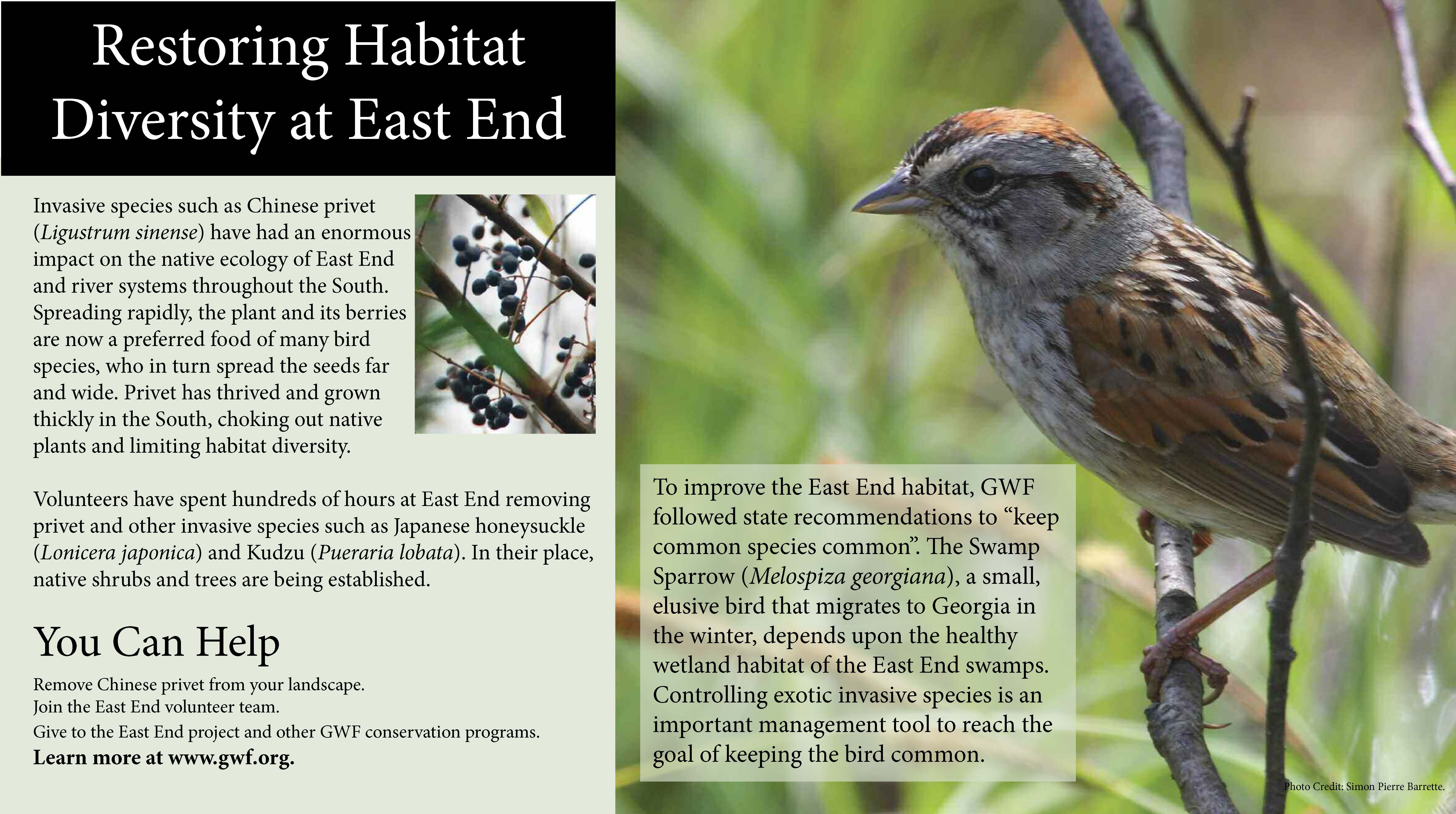 East End Invasives